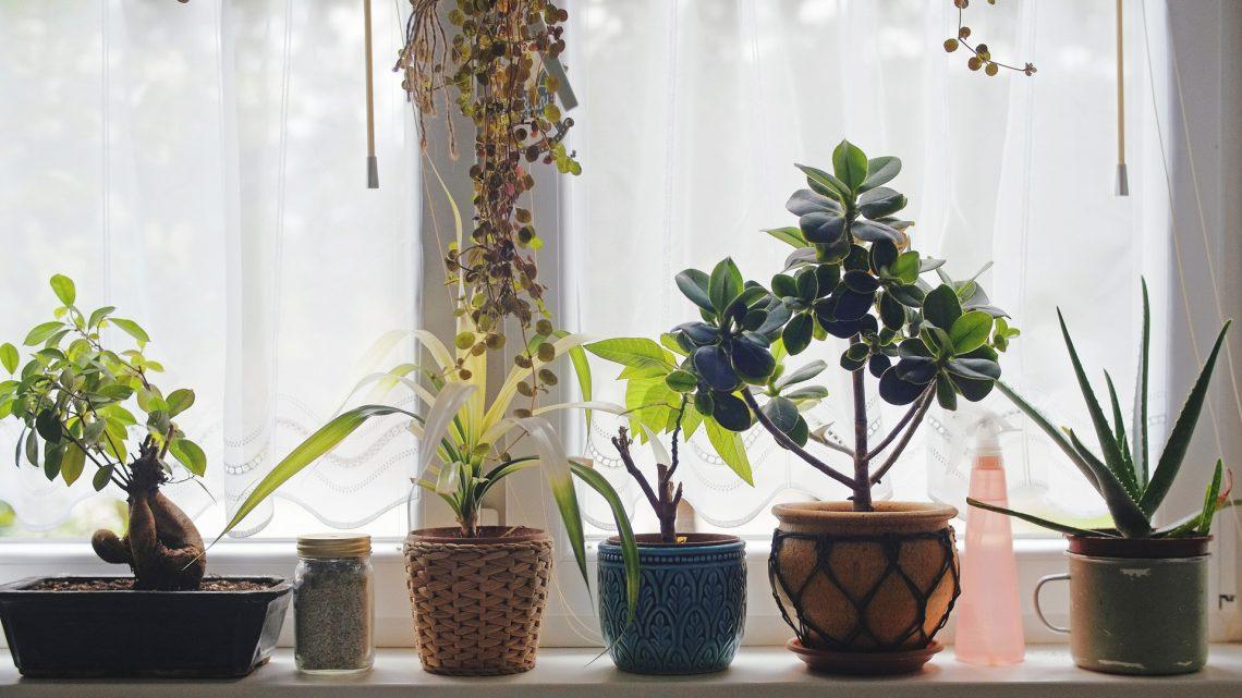 Les astuces pour décorer son intérieur avec des plantes et des fleurs